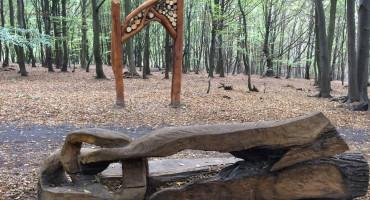 Velký průhled do lesa