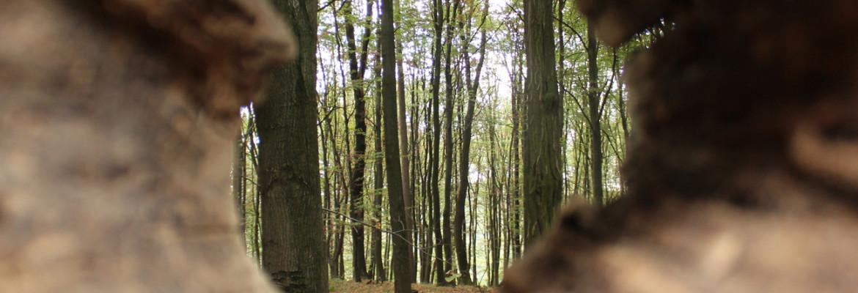 Průhled do lesa